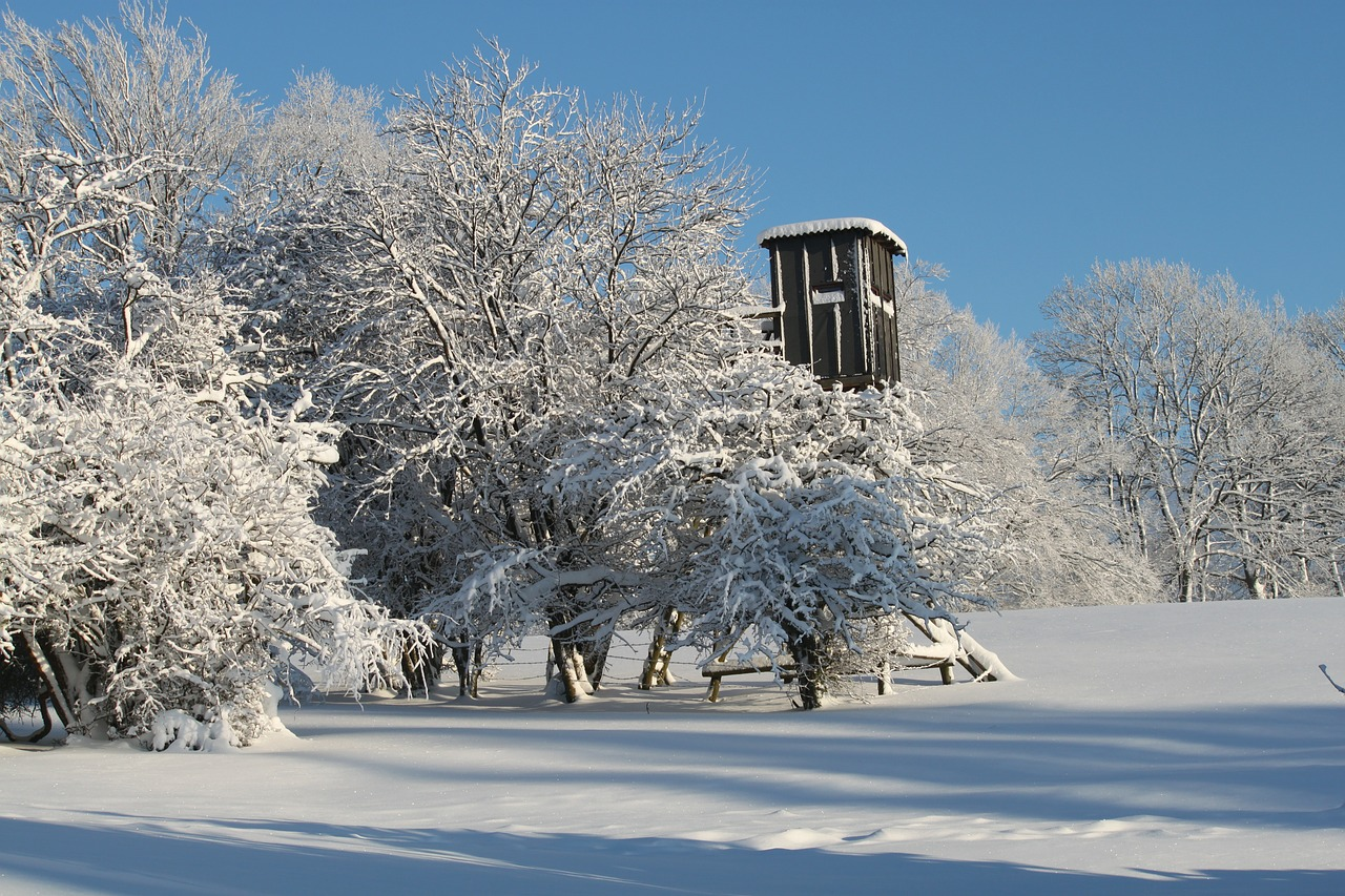 Tree stand in snow